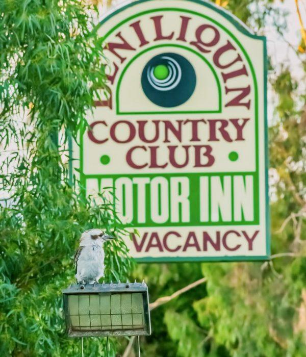 Kooka with motel sign - Deniliquin Accommodation - Deniliquin Country Club Motor Inn